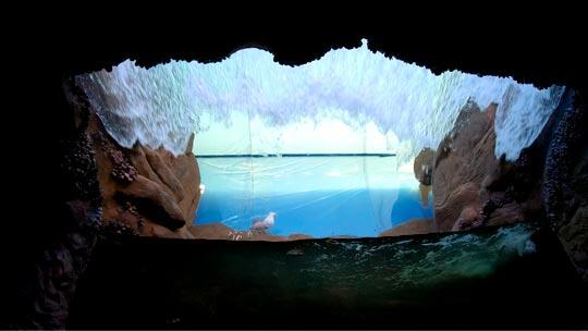 Inaugurado no final de 2017, no Aquário de Ubatuba, o Tanque do Costão Rochoso oferece a experiência imersiva entre os sons e cheiros do mar