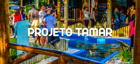 Visite o Projeto Tamar em Ubatuba