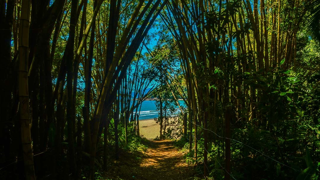 Chegada da Praia do Costa em Ubatuba totalmente coberta por bambús após trilha rápida e fácil