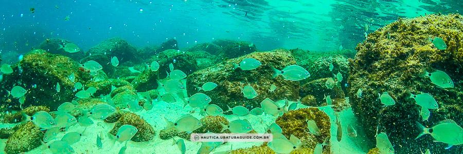 Cardume de peixes nas águas cristalinas da Ilha das Couves