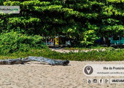 Jundu, planta importante para a preservação da biodiversidade, presente em toda a orla da ilha