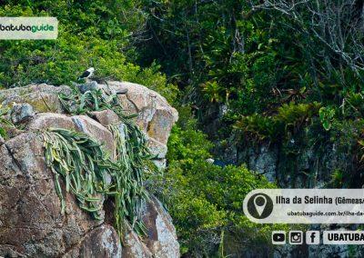 ilha-da-selinha-gemeas-rachada-ubatuba-180921-036