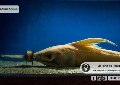 Peixe morto por não conseguir respirar ao se enroscar em linha de pesca