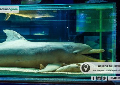 Golfinho morto em exposição no Museu da Vida Marinha do Aquário de Ubatuba