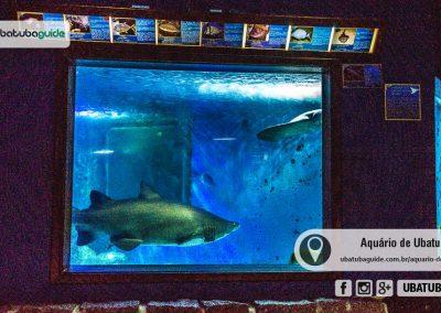 Tubarões, arraias e outras espécies no Tanque Oceânico do Aquário de Ubatuba