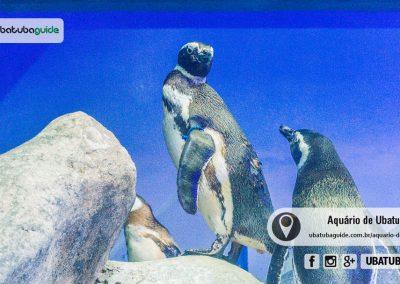 aquario-de-ubatuba-180323-100