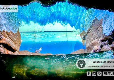 Novo tanque, do Costão Rochoso, onde a água passa por um vidro sobre a cabeça dos visitantes