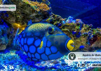 Peixe multicolorido em tanque no Aquário de Ubatuba