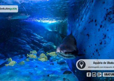 Tubarão vindo de encontro ao vidro do Tanque Oceânico no Aquário