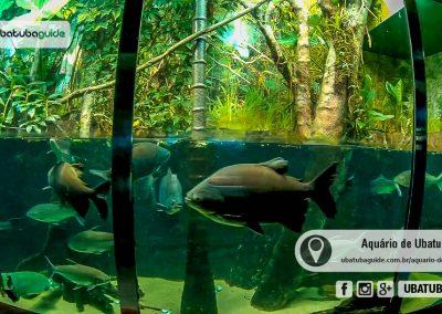 Diversas espécies de peixes na Galeria de Água Doce do Aquário
