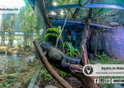 Iguana fazendo pose para a câmera no Aquário de Ubatuba