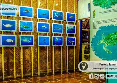 projeto-tamar-ubatuba-080822-004