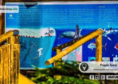 projeto-tamar-ubatuba-080822-019