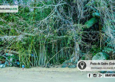 praia-do-cedro-ubatuba-170914-026
