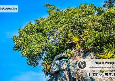 praia-esquecida-do-portugues-ubatuba-170526-051