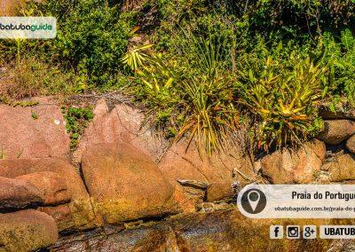 praia-esquecida-do-portugues-ubatuba-170526-065