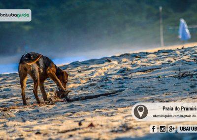 praia-do-prumirim-ubatuba-170622-015